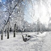Winter Nature, Snowstorm