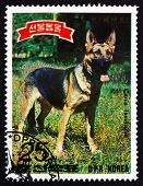 Postage Stamp North Korea 1989 German Shepherd