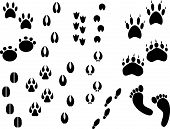 picture of bear tracks  - Collection of vector outlines of animal foot prints - JPG
