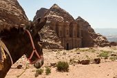 picture of camel-cart  - A donkey in front of the stunning ruins of the Monastery in Petra Jordan - JPG
