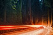 image of sequoia-trees  - Giant Sequoia Forest Traffic at Night - JPG