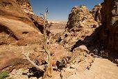 pic of camel-cart  - 9 June 2014 Petra Jordan - JPG