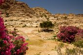stock photo of oleander  - A small wadi  - JPG