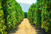 California Produce Farm