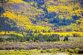 Fall Foliage Colorado