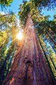 Epic Sequoia Place
