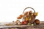 Ceps on white background, autumn harvest crop
