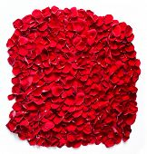 Red rose petals background, pattern. Perfect for wedding design, Valentine's Day, anniversary etc. Isolated on white.