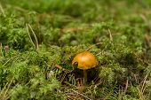 The Fungus In Green Moss