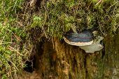 Lichen On A Tree Stump