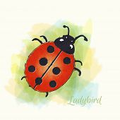 Watercolour illustration of a ladybird.