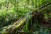 Wild Tropical Plant In Mossy Rain Forest Thailand