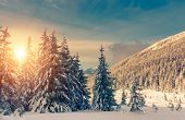 Fantastic evening landscape glowing by sunlight. Dramatic wintry scene. Natural park. Carpathian, Ukraine, Europe. Beauty world. Retro filter. Instagram toning effect. Happy New Year!