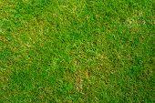 Grass Texture
