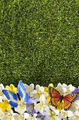 stock photo of butterfly flowers  - Spring or summer border background with flowers grass and butterflies - JPG