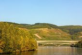 picture of moselle  - The vineyards along the river Moselle Germany. Autumn