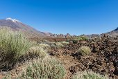Lava Field With El Teide