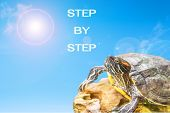 stock photo of craw  - metaphor of step by step with turtle and sun background - JPG