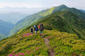 Group Of Tourists Walking Flowers Field In Mountain