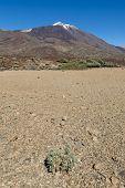 View On El Teide