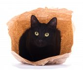 Cute black cat peeking out of a brown paper bag, on white