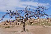 Picturesque Landscape With Tree, Cappadocia In Turkey.