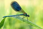 Beautiful Dragonfly  On A Meadow Closeup