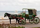 Horse And Green Buggy By The Sea