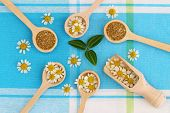 Fresh and dried chamomile flowers on wooden spoons on blue cloth