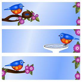 picture of bluebird  - Set of 3 bluebird address labels or banners - JPG