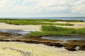 picture of tide  - The Low Tide landscape on the sound side of Hilton Head Island is comprised of tidal pools - JPG