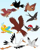 image of polly  - Set of vector illustrated birds  - JPG