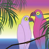 pic of sun perch  - Background with two colourful parrot bird sitting on the perch on the beach - JPG