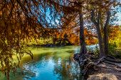 stock photo of guadalupe  - Bright Fall Foliage Surrounding the Guadalupe River at Guadalupe State Park - JPG