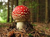 Toadstool Baby