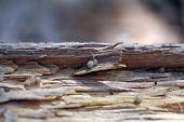 Spider Hatchlings