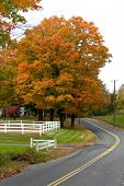 Vibrant Fall Foliage Maple Tree