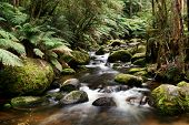 Mossy rocks, lush ferns, and softly flowing river