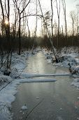 Winter Swamp River