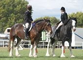 picture of clydesdale  - Two competitors mounted on Clydesadles waiting for the judge in the mounted class - JPG