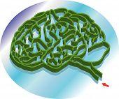 Brain Maze