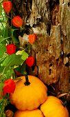 Harvest Style Background