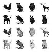 Puppy, Rodent, Rabbit And Other Animal Species.animals Set Collection Icons In Black, Monochrome Sty poster