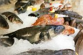 Fresh Fish Chilled On Ice In Supermarket. Fish Iced For Sale. Sea Catch In Shop Or Market. Seafood A poster