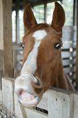 Funnyhorse