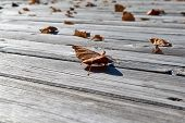 On The Wooden Floor Are Fallen Leaves Of Yellow And Orange. Many Fallen Autumn Leaves Lying On The S poster