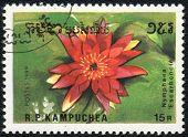 Nymphaea Escarboucle