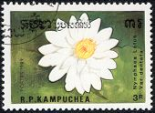 Nymphaea Lotus