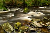 foto of irish moss  - Beautiful creek of Clare Glens - JPG