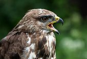 Screeching Bird